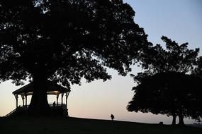 悉尼国家公园树木剪影