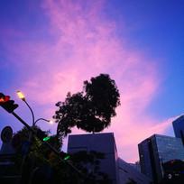 城市树木剪影- 心红