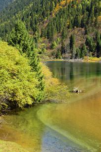 流进阿坝达古湖的清澈小溪