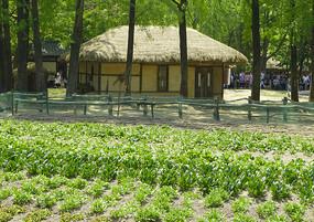 韩国传统民居建筑和菜地