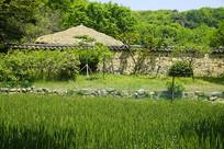 韩国南方富贵人家庭院和麦田