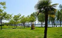 湖边公园绿色的草皮