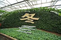寿光菜博会景观之字体冬