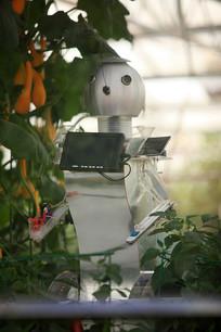 寿光菜博会农业机器人