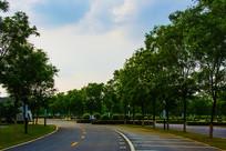 鞍山奥体中心湾形公路车位树木