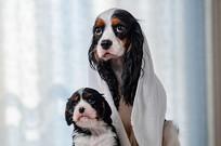 小奶狗与狗妈妈