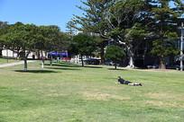 悉尼城市绿地