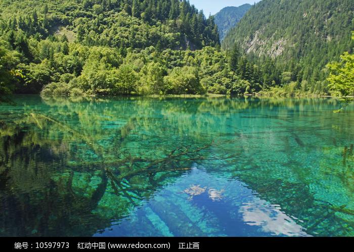 阿坝九寨沟孔雀海及水底钙化树图片