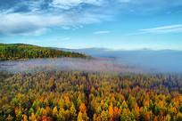 航拍云雾中的大兴安岭五彩林