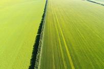 金色的田野景观