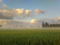 乡村清晨薄雾飞