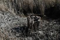 墨尔本天鹅湾湿地公园植物