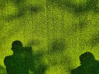 阳光下绿色的草地与影子