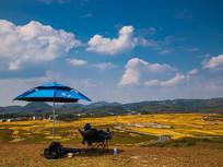 云顶草原赏金黄的稻田