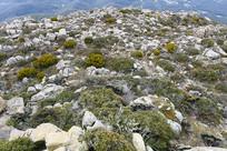 惠灵顿山岩石坡