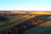 秋季金色的农田