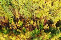金秋树林风光