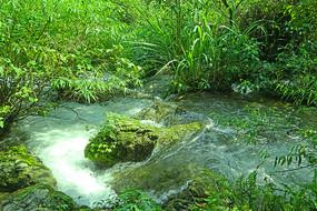 荔波小七孔景区响水河石上森林