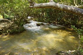 黔南荔波小七孔响水河石上森林