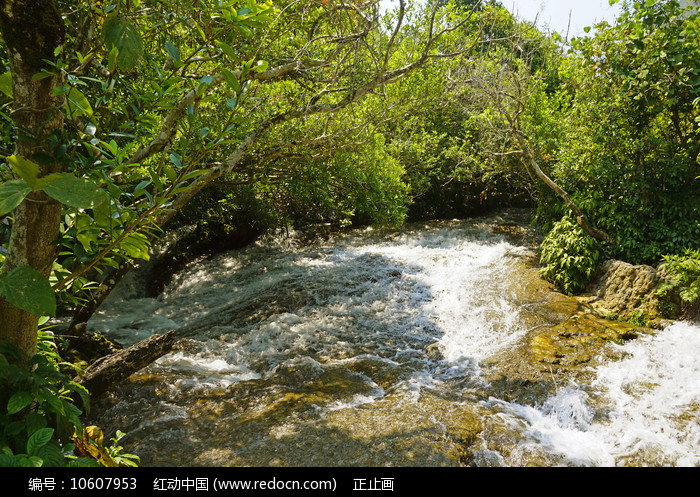 黔南小七孔-响水河-石上森林图片