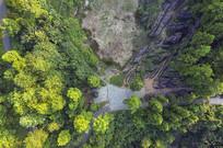 俯瞰一片树林