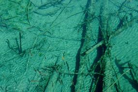 九寨沟湖底的钙化木