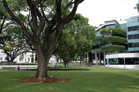新加坡宾馆大草坪