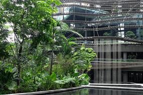 新加坡酒店绿化