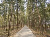 杨树林道路