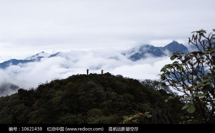彭州三口锅上顶的杜鹃林的山坡图片