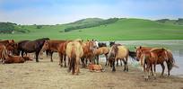 草原上的马