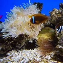 海底世界景观