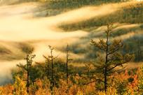 大兴安岭森林秋色云雾升腾