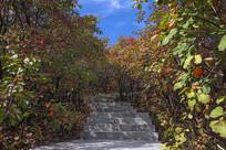 秋季红树林-拾秋