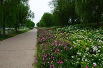 公园鲜花绿化带