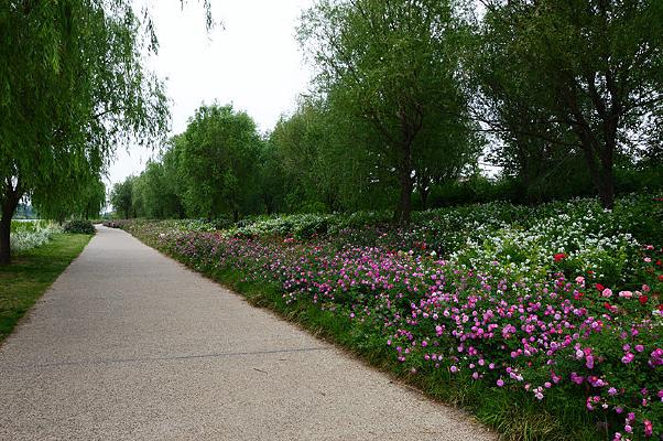 花木绿化带