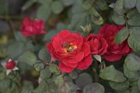 红花和小蜜蜂