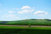 呼伦贝尔绿色农田风景
