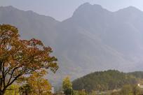 秋天红遍山