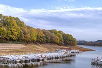 游船码头的秋天