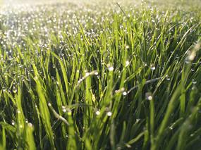 草地露珠素材