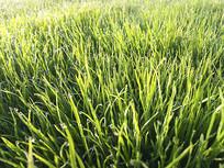 晨曦绿草地