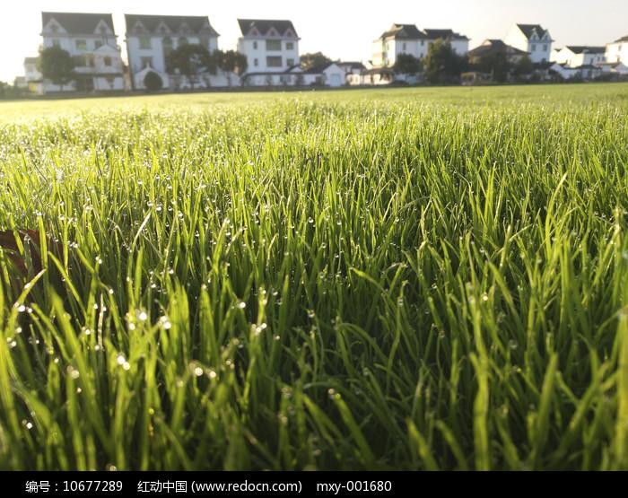 绿草家园图片
