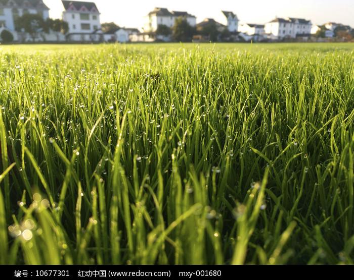 绿地绿草家图片