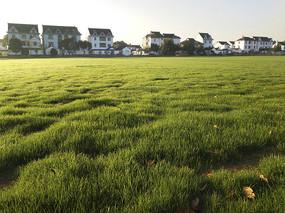 乡野绿草地