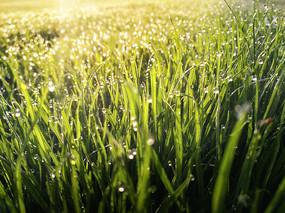 阳光草地景色