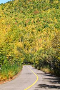 大兴安岭森林之秋山路弯弯