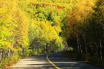 金秋彩林山路风景