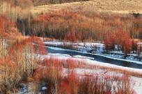 山野红树林冰封河流