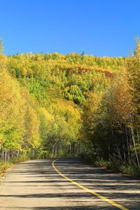 通向秋色密林的公路